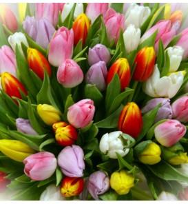 Bouquet de tulipes variées